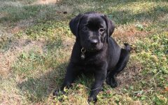 Pet Adoption In Lockdown